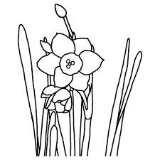 スイセン水仙白黒福井県の花都道府県の木花鳥イラスト素材