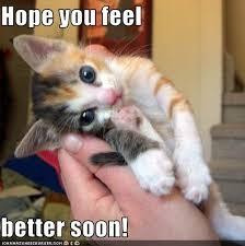 Image result for cats feeling better