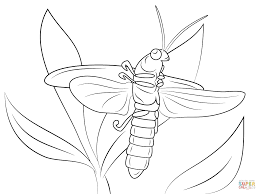 Small Picture Lightning Bug coloring page Free Printable Coloring Pages