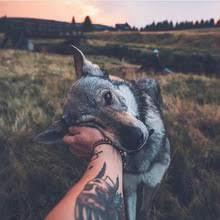 ivan wolf - Coub