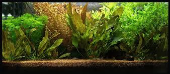 Aquarium Licht Beleuchtung Aquaristik