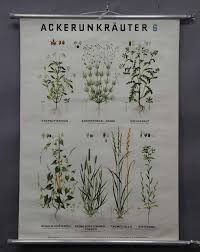 Favorite Botanical Illustrations Our 10 Best Sources For