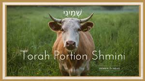 Image result for shemini torah portions copyright free images