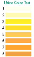 Army Hydration Chart What Color Should Urine Be Bladder Help