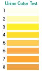 What Color Should Urine Be Bladder Help