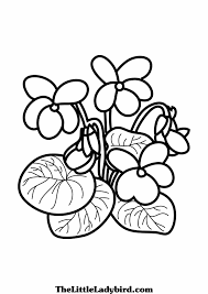 More Coloring Pages Of Violet