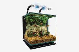 5 best fishbowls and aquariums 2019