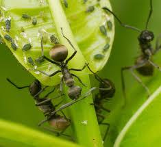 alexandria pest control. Brilliant Control Generalpestinset Throughout Alexandria Pest Control C