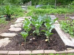 vegetable garden beginner vegetable garden starting out