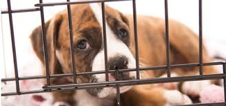 animal shelter pictures. Plain Pictures Shelter Animal Outcomes Inside Pictures E