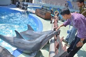 Pantai sigandu, batang, jawa tengah. Mengenal Batang Potensi Batang Dolphin Center Website Pemerintah Kabupaten Batang