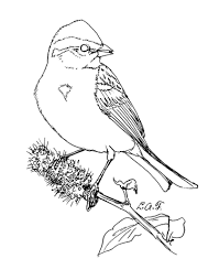 Small Picture American Tree Sparrow coloring page Free Printable Coloring Pages