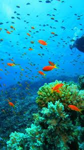 🥇 Nature underwater wallpaper