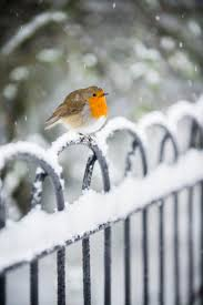 Robins Kitchen Garden City 17 Best Images About Robins On Pinterest English Nests And Bird Art