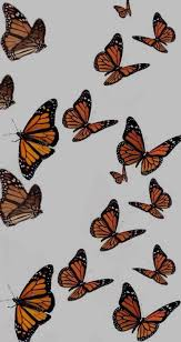 High quality monarch butterfly aesthetic gifts and merchandise. Monarch Animals And Butterfly Image 7852628 On Favim Com