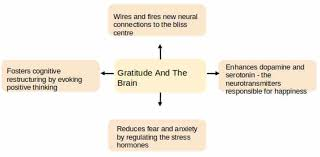 The Neuroscience Of Gratitude And How It Affects Anxiety Grief