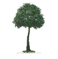 Decorative Indoor Trees Indoor Ficus Trees Indoor Ficus Trees Suppliers And Manufacturers