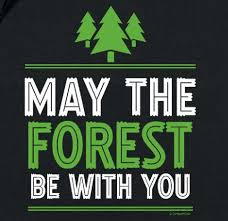 """<b>May</b> the Forest Be with You"" (And Why It Matters) - American Forests"