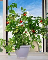 indoor apartment gardening. Perfect Apartment Vegetables To Grow Indoors And Indoor Apartment Gardening N