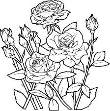 Big Flower Coloring Sheets Flowers Healthy