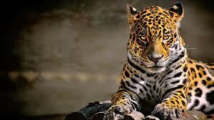 Leopard 4k Glowing Eyes, HD Animals, 4k ...