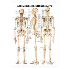Human Skeleton Wall Chart Wall Chart The Human Skeleton Lxw 100x70 Cm