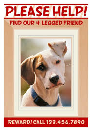 Lost Pet Flyer Maker Adorable Free Poster Templates PageProdigy