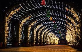 Budweiser Christmas Lights Budweiser Brewery Christmas Lights