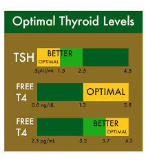 Thyroid Chart The Effectiveness Of Cbd Oil For Thyroid Disorder Cheef