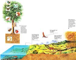 essay on ecosystem ecosystems essay