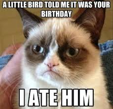 grumpy cat birthday bird. Brilliant Cat Grumpy Cat A Little Bird Told Me It Was Your Birthday I Ate Him With Grumpy Cat Birthday Bird Pinterest