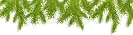 tree branch with leaves vector. branch of christmas tree, isolated on white background, vector illustration, tree with leaves g