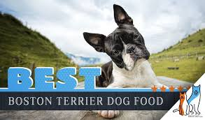 Canidae Dog Food Feeding Chart 15 Best Dog Foods For Boston Terriers Our 2019 In Depth
