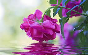 Beautiful Flowers Wallpaper Free Download