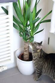Pflanzen F R Badezimmer Rubengonzalezclub