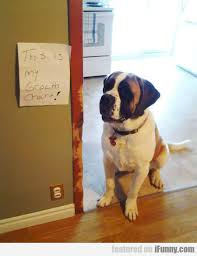 Puggle Growth Chart Look This Is My Growth Chart Ifunny Com