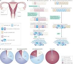 Free Patent Claim Chart Generator Clinical Actionability Of Molecular Targets In Endometrial