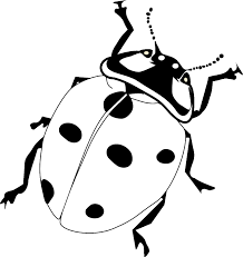 Small Picture Charming Ladybug Coloring Pages Ladybug Coloring Pages Image 1