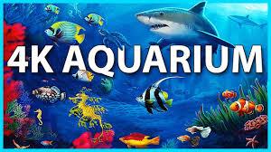 Aquarium 4k Download - freelasopa
