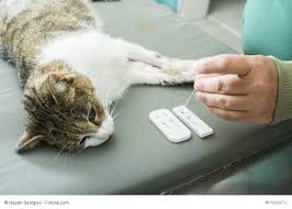 Die maus sitzt im papierkorb. Unsaubere Katze 10 Grunde Und Tipps Haustiermagazin