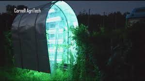 Uv Light To Kill Powdery Mildew Crop Researchers In Geneva Turning To Uv Lights News