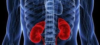 Рак почки симптомы признаки у мужчин и женщин прохождение  Что нужно знать о раке почки к 50 годам