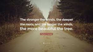 "Roots Quotes Delectable Charles R Swindoll Quote ""The Stronger The Winds The Deeper The"