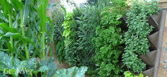 The 25 Best Garden Screening Ideas On Pinterest  Garden Privacy Wall Climbing Plants Nz