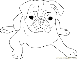 Small Picture Cute Pug Face Coloring Page Free Dog Coloring Pages