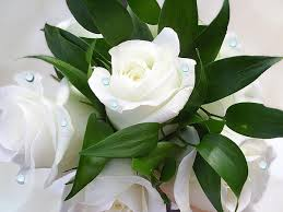 Image result for images of white roses hd