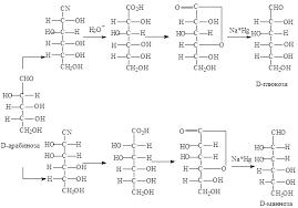 Химия Олигосахариды и полисахариды Реферат Учил Нет  Деградация альдоз по Руффу представляет собой свободнорадикальное декарбокислирование соли гликоновой кислоты в результате которого углеродная цепь альдозы