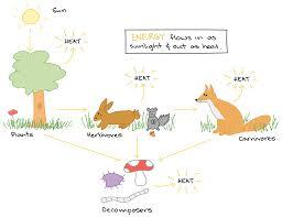 Organization Of Matter Flow Chart What Is An Ecosystem Article Ecology Khan Academy
