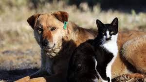 Hayvanları Koruma Kanunu Meclis'te - Timeturk Haber