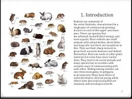 Rodents Lower Classifications Small Rodents